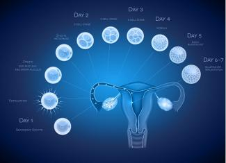 Embryo Implantation