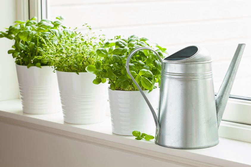 Herbs at Home