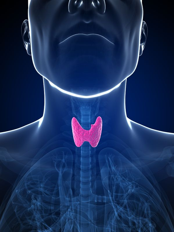 Thyroid Health - Naturopathic Approaches to Strengthening the Thyroid